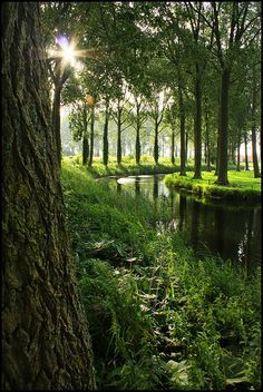 Morning light along the canals of Damme in Flanders, Belgium (by Tico09).