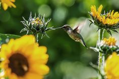 Jane Says: Make Room for Birds and Butterflies in Your Garden