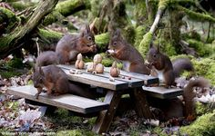 red squirrels picnic