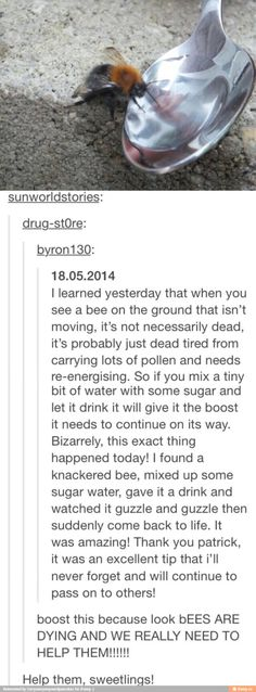 Tumblr Aww, reminds me of the time I saw a drunk bee.