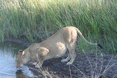 The Great wilderness Safari in Botswana in April 2012