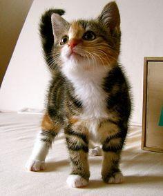 Prettiful kitty