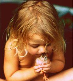 little chicks bird, kiss, little girls, baby ducks, baby boys, children, baby girls, baby chicks, kid