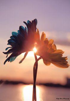 Sunrise ....Sunset....Time Passages