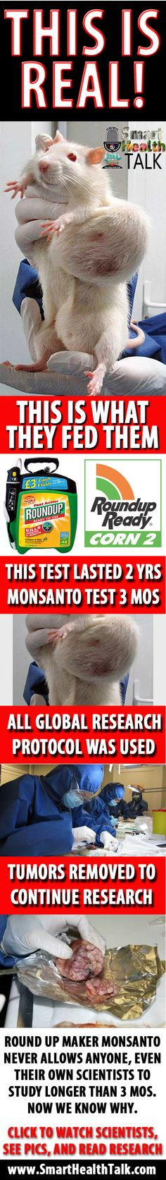 Remember the Seralini study? Rats fed GMOs, Monsanto's Roundup Ready corn, developed tumors. Some died. The study was published in the journal, Food and Chemical Toxicology. Pictures published. A wave of biotech-industry criticism ensued. Pressure built... The journal retracted the study. Why? Unethical? Plagiarized? Dishonest?  No, he used rats which (supposedly) had an inherent tendency to develop tumors (the Sprague-Dawley strain), and used too few. Smell a rat?