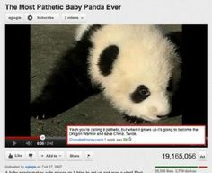 Don't mess with Panda Warriors. Best Youtube comments