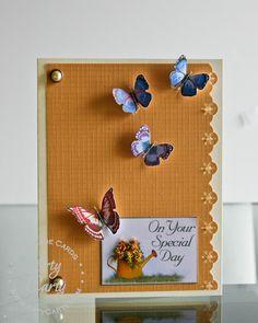 Butterfly Garden by Stephanie Lee