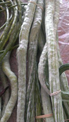 Snake gourds, an Asian summer squash variety