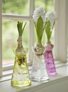 Hyacinth Bulb Vases, my Grandma taught me how to grow these, they flower on my birthday