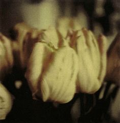 Cy Twombly - Tulips 1985