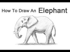 ▶ How to Draw an Elephant - YouTube