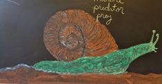 Waldorf ~ 4th grade ~ Human & Animal ~ Snail ~ chalkboard drawing