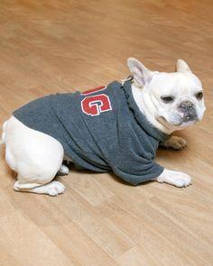 Great idea! Make a dog jacket from an old sweatshirt!