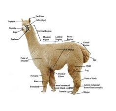 How to build an alpaca