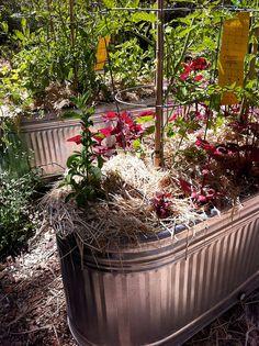 stock tank container garden
