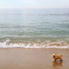Our favorite #Hamptons instagrams from the weekend: http://ow.ly/y9bnJ #Hamptons #Morningwalk #favoriteinstagrams #summer