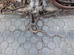 Adaptive Roots in the Concrete Jungle