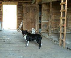 Farm dog, upstate NY