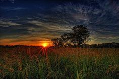 """Morning glory"" by George Saad"