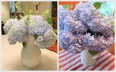 Hydrangeas: How to Make Cut Blooms Last