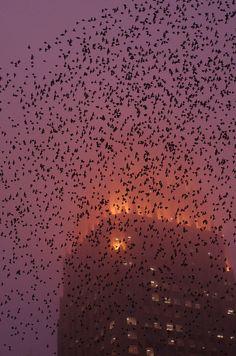 Fire Birds - By AlphaTangoBravo / Adam Baker