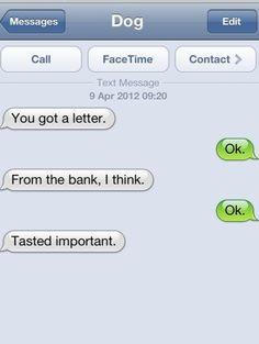 It Tasted Important #dog texts funni text, mitten text, dog texts, text anim
