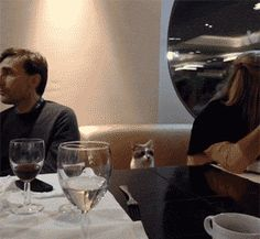 funny-gif-cat-restaurant-people-table