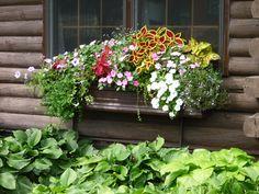 Window Box Contest Entry window box with flowers