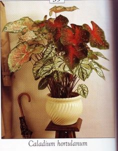 Lovely house plant tutorial in French with the leaves ready to print out