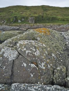 Lichen and striations on the shore of Eileach an Naiomh in the Garvellachs, small islands off Scotland's west coast