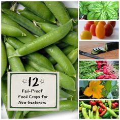 Choose these crops for first time success in the garden! (great ideas for kiddos in the garden!)