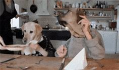 The Best Gif On The Internet