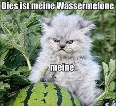 dies ist meine wassermelone - German watermelon kitten