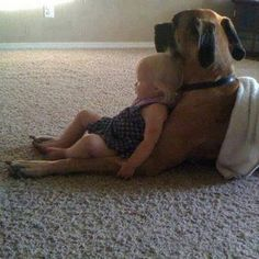 chair, seat, boxer, pet pictures, hous, puppi, dog, friend, kid