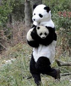 Panda Panda Panda Panda Panda #panda