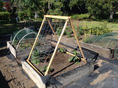 Trellis your cucumbers plants, I built this trellis for mine