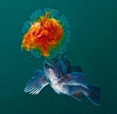 Navigating the underwater wilderness – CNN Photos - CNN.com Blogs