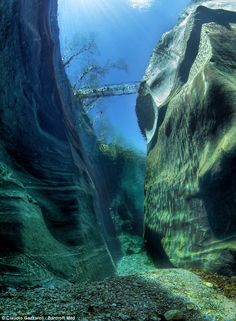 Bridge and trees, as seen from 50 ft underwater at the bottom of the  super clear Verzasca river.