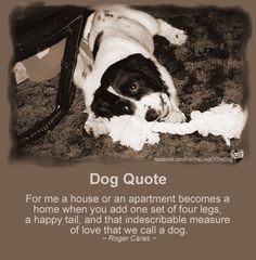Great dog love quote