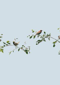 Birds, Andrew B. Myers