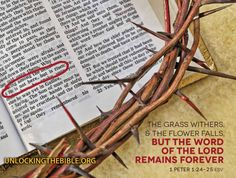 """""""The grass withers and the flower falls, but the Word of the Lord remains forever."""" 1 Peter 1:24-25 #Bible @UnlckngtheBible"""