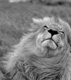 feeling the wind in his fur
