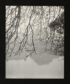 Josef Sudek - Tree Ends