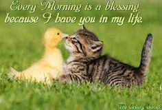 Blessings On Pinterest Irish Blessing Blessed Quotes