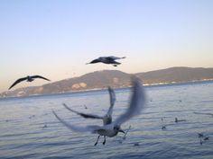 Kireçburnu Birds