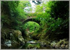 vacation travel photos - Tollymore Forest Park, Northern Ireland