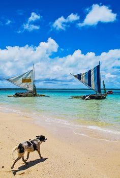 Ile des Pins, New Caledonia - Traditional sailing pirogues that are still used on the island today.  #travel #newcaledonia #islands