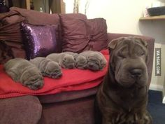 I, a big wrinkle, made all of these smaller wrinkles