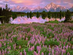 Grand Teton National Park. Bucket list.