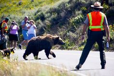 Be Bear Aware!!!  Stay Bear aware while visiting national parks.  I never leave my cabin/hotel/campground without bear spray when I'm hiking out West.